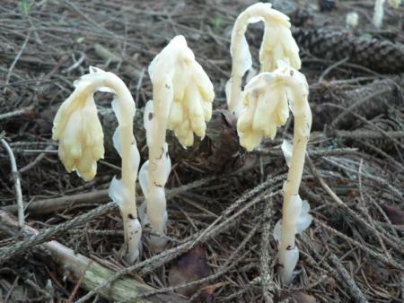 Šumava houby