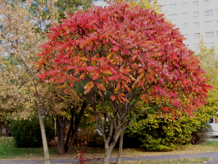 Podzim na Polabinách