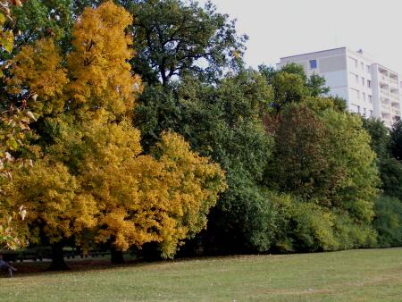 Podzim na Polabinách>
