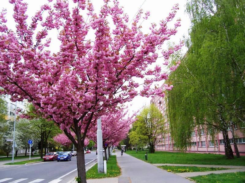 Pardubice Polabiny